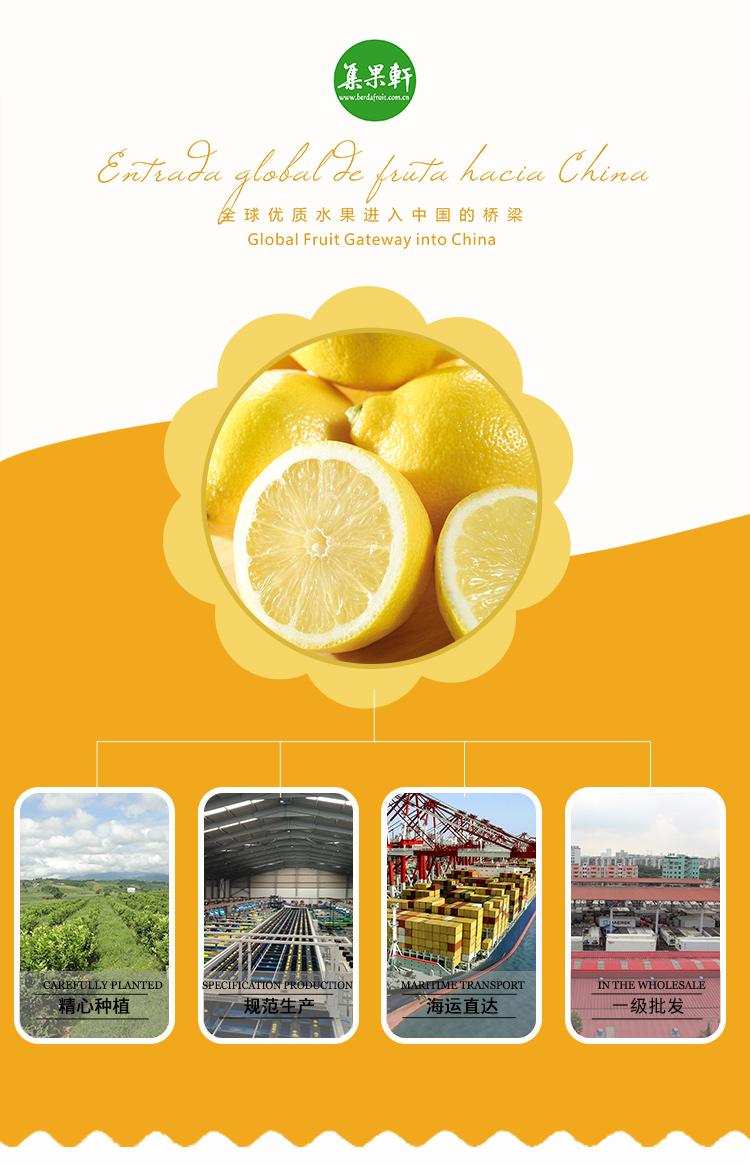 進口水果批發南非檸檬批發商