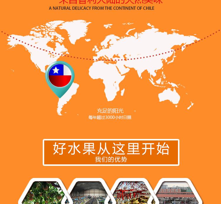 智利进口水果批发商
