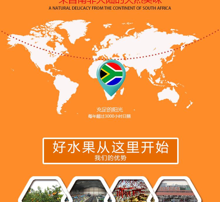 南非晚熟脐橙进口水果批发商