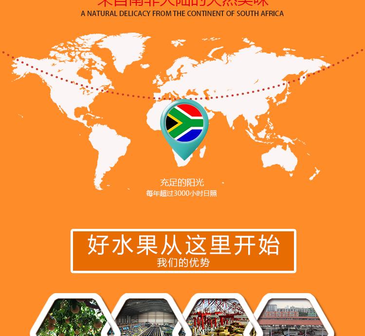 南非进口水果批发